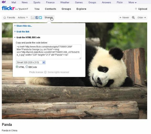 panda on flickr