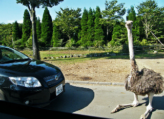 roadblock-by-ostrich