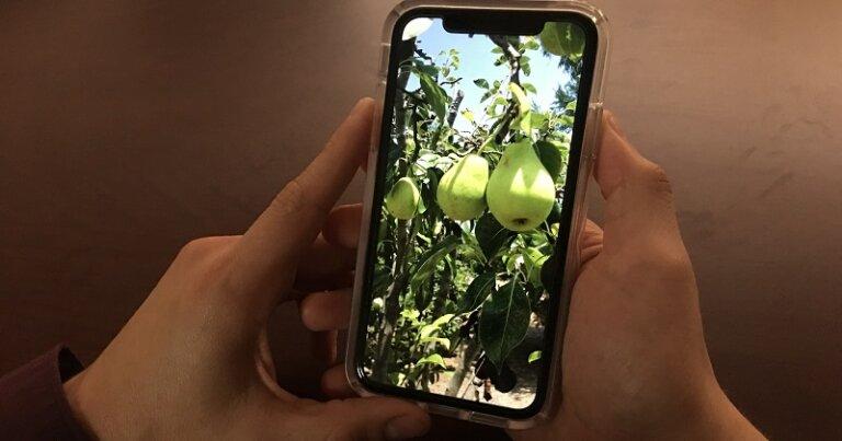 Image display on mobile phone.