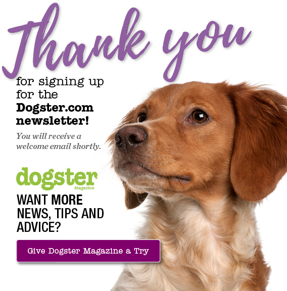 Dogster thank you page.